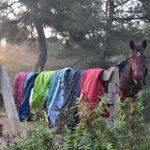 camping-salvaje-con-naturacavall-3