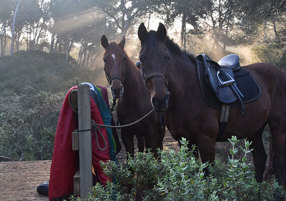 camping-salvaje-con-naturacavall-4